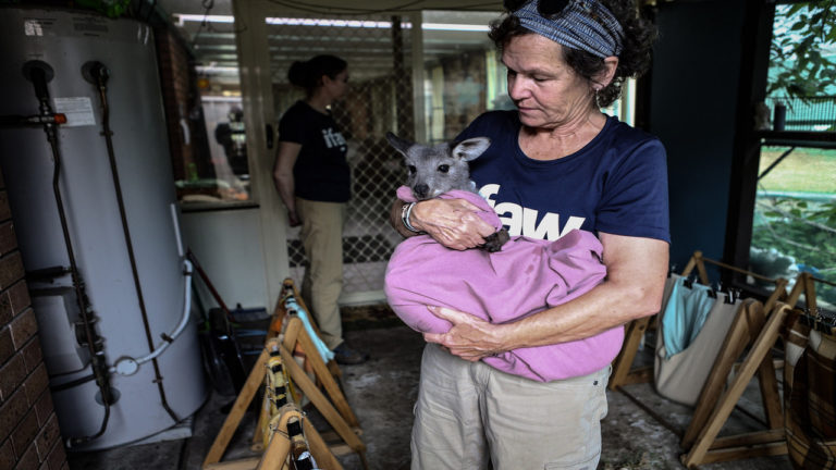 International Fund for Animal Welfare (IFAW) partners with Dept