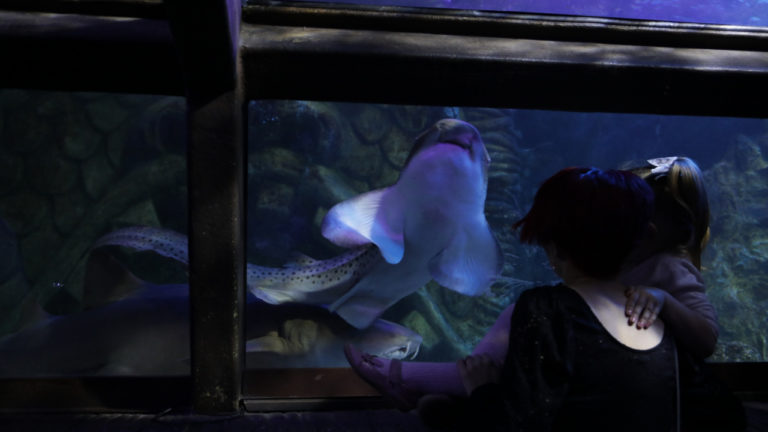 From Plymouth To Blackpool – Zebra Sharks Find Their New Forever Home