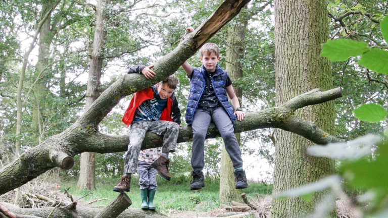 The Heart of England Forest receives grant of £249,700 from the government's Green Recovery Challenge Fund
