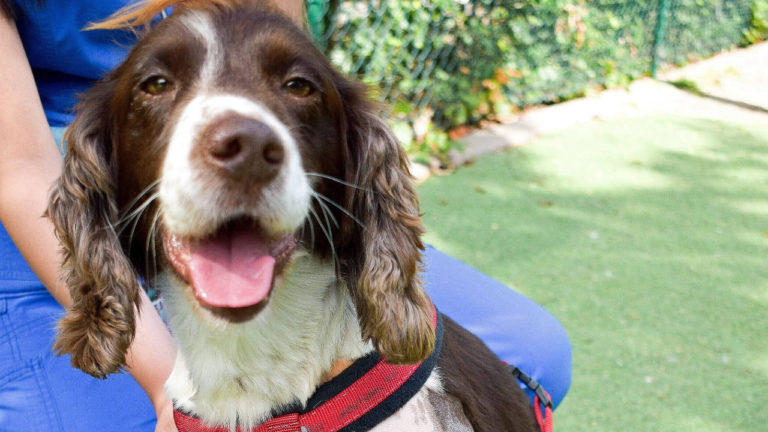 Injured South Yorkshire Police dog Winston back on the beat thanks to Wakefield vets