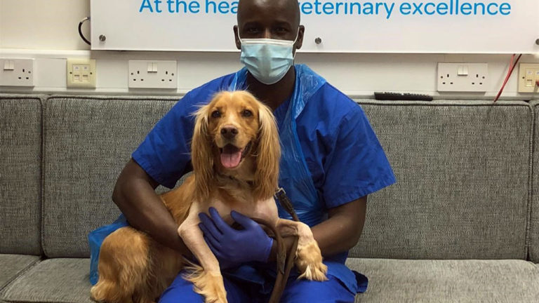 Blacks Vets use 3D printing to create new elbows for Springer Spaniel