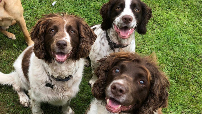 Midlands' Pawpounders open day aims to teach dog owners about behaviour and training
